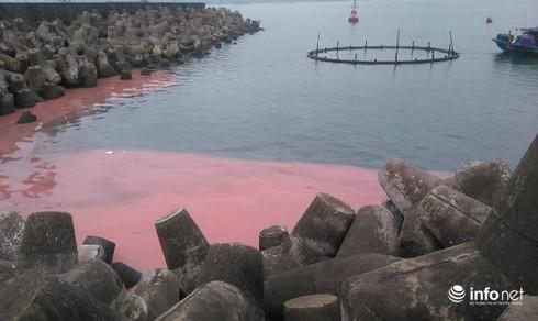 Thực hư chuyện biển Vũng Áng xuất hiện dải nước màu đỏ - ảnh 2