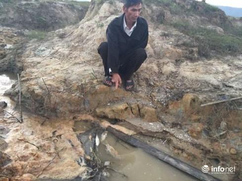 Hà Tĩnh: Thực hư chuyện cá gáy chết trên sông Quyền - ảnh 1