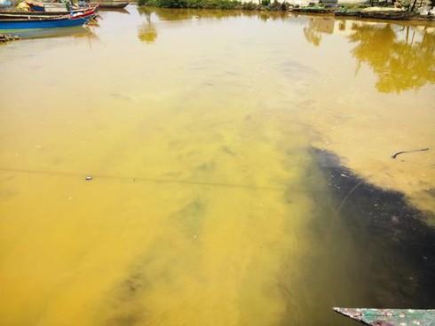 Huế: Cá chết từng đàn gần khu vực xuất hiện dải nước màu vàng - ảnh 1