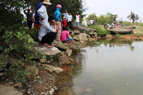 Huế: Cá chết từng đàn gần khu vực xuất hiện dải nước màu vàng - ảnh 5