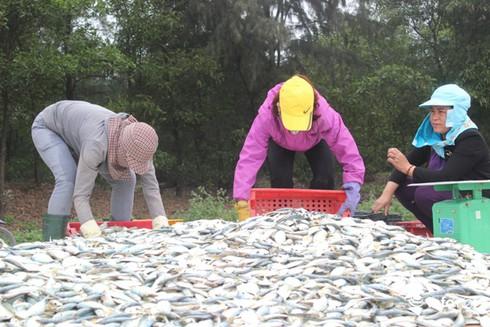 Sự cố môi trường biển miền Trung, 1 năm nhìn lại - ảnh 2
