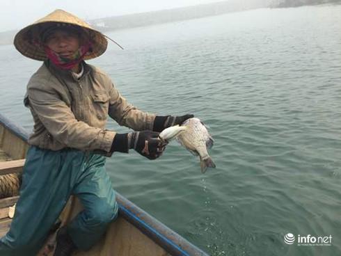 Sự cố môi trường biển miền Trung, 1 năm nhìn lại - ảnh 1