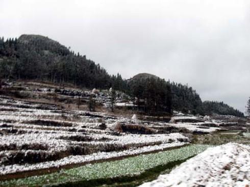 Tuyết rơi diện rộng tại Mèo Vạc - ảnh 1