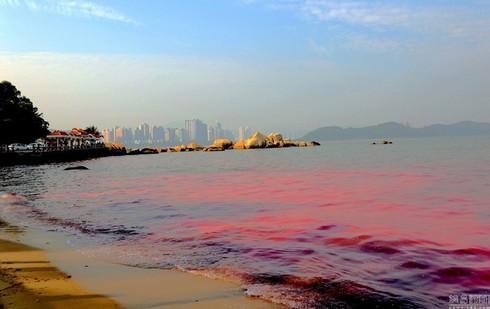 Thủy triều đỏ là gì, đã từng có ở Việt Nam chưa? - ảnh 1