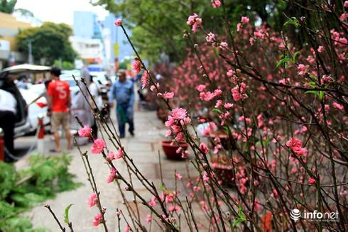 Du khách nước ngoài ngẩn ngơ trước rừng hoa bán Tết ở TP.HCM - ảnh 8