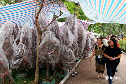 Du khách nước ngoài ngẩn ngơ trước rừng hoa bán Tết ở TP.HCM - ảnh 6