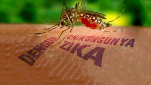 TP.HCM: 9 thai phụ nhiễm virus Zika - ảnh 1