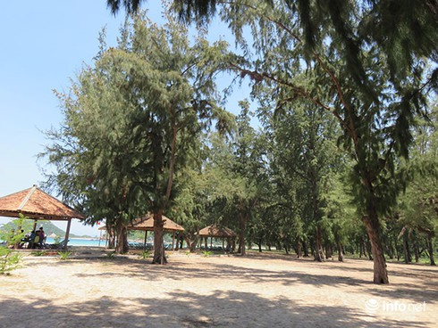Hoài niệm buồn về những rừng dương đã mất ở ven biển Đà Nẵng - ảnh 1