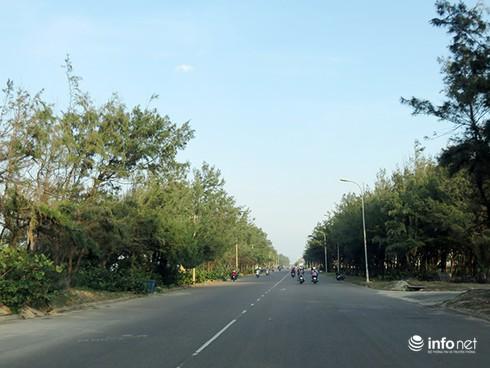 Hoài niệm buồn về những rừng dương đã mất ở ven biển Đà Nẵng - ảnh 8