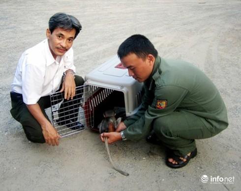 Đà Nẵng: Người dân tự nguyện chuyển giao voọc chà vá, rùa 3 gờ - ảnh 1