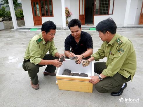 Đà Nẵng: Người dân tự nguyện chuyển giao voọc chà vá, rùa 3 gờ - ảnh 2