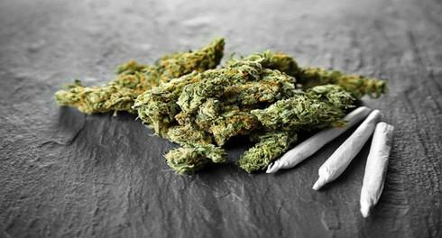 Tìm hiểu về các loại ma túy phổ biến và tác hại của chúng
