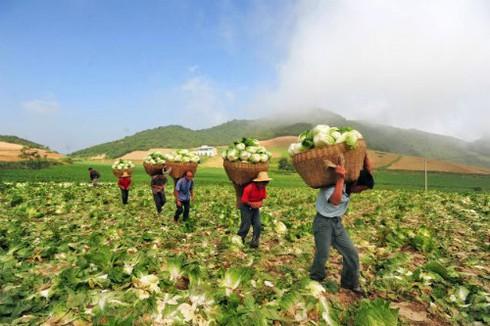 """Trung Quốc và cuộc """"xâm chiếm"""" đất nông nghiệp toàn cầu - ảnh 1"""