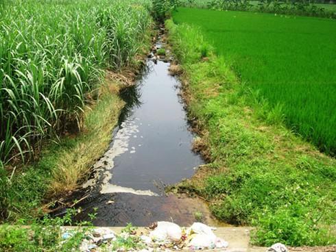 Nước thải nhà máy Cồn gây chết người, ô nhiễm môi trường - ảnh 3