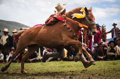 Đua ngựa phong cách Tây Tạng