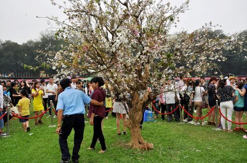 Shop TIN 18/4: Văn tế Vua Hùng - Người Nhật sau động đất - Rác ngày Đại lễ - ảnh 11