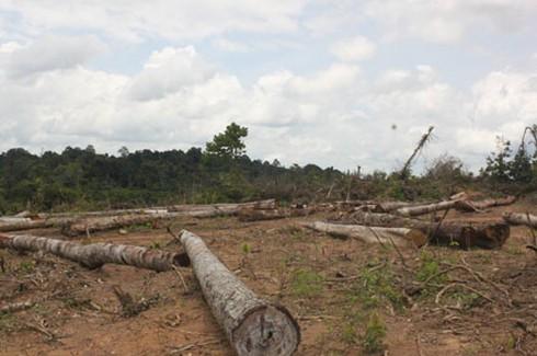 Shop TIN 21/8: Thủ tướng: Kiên quyết đóng cửa rừng để cứu rừng - ảnh 3