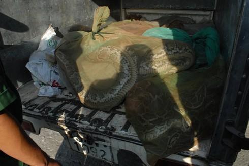 Phát hiện xe tải chở cả thùng trăn sống - ảnh 1