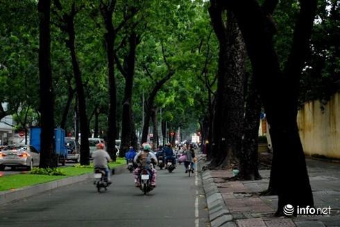 TP.HCM: Có những dự án bị bác bỏ vì gây ảnh hưởng tới cây xanh - ảnh 1