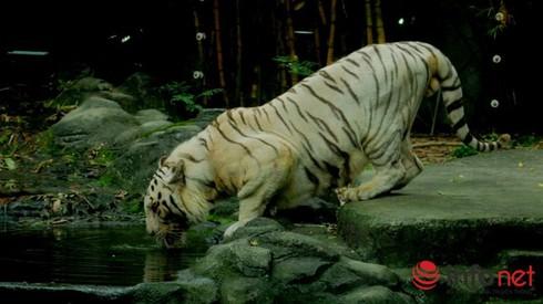 TP.HCM: Sau 12 năm, vườn thú tầm cỡ Đông Nam Á có cơ hội