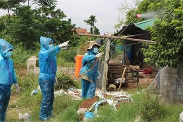 Phú Yên phòng dịch cúm gia cầm: Đảm bảo tỷ lệ tiêm phòng đạt từ 80%
