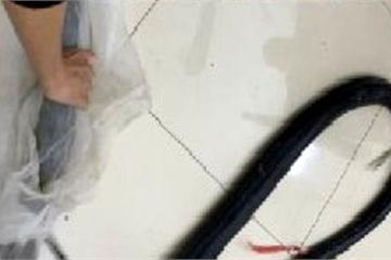 Phát hiện rắn hổ mang chúa nặng gần 10kg trên xe ô tô