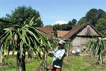 Quảng Bình: Bình quân mỗi xã của huyện Minh Hóa đạt 12,7 tiêu chí nông thôn mới