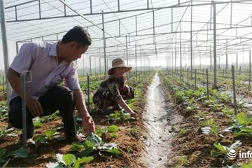 Nghệ An: Phát triển sản xuất gắn với tái cơ cấu ngành nông nghiệp