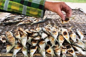 Thơm lừng cá trích nướng đầu mùa ở ven biển xứ Nghệ
