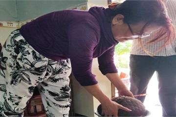 Quảng Nam: Phát hiện hàng loạt động vật hoang dã quý hiếm tại nhiều nhà dân