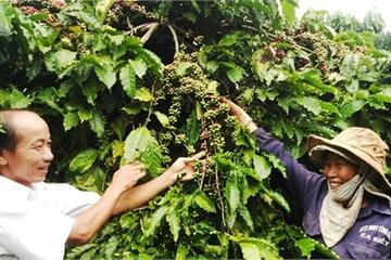 Đắk Lắk chú trọng tái cơ cấu ngành nông nghiệp để xây dựng nông thôn mới
