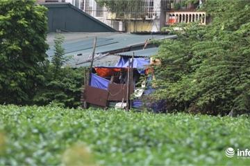 Hà Nội: Hồ Rẻ Quạt nhếch nhác, nhà quây tôn lụp xụp bủa vây