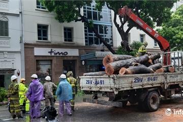Hà Nội: Mưa lớn kéo dài, nhiều tuyến phố ngập úng, cây đổ la liệt