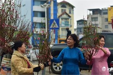 Đào Nhật Tân bung nở khoe sắc, phố phường Hà Nội đã rộn ràng sắc xuân