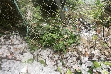 Phú Thọ: Chiều mùng 1 Tết nhiều nơi xuất hiện mưa đá