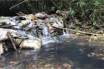 Hòa Bình thông tin về vụ nước sông Đà: Đã khởi tố vụ án!