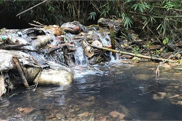 Triệu tập 2 người liên quan đến vụ đổ dầu gây ô nhiễm nước sông Đà