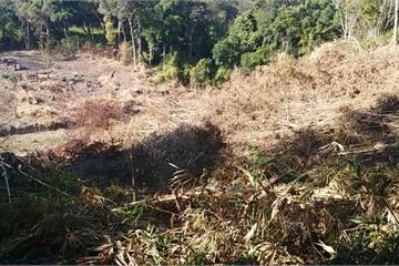 Gia Lai: Rừng được tài trợ 8 tỉ đồng để bảo vệ vẫn bị tàn phá nghiêm trọng