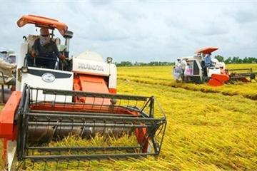 Gắn sản xuất với tiêu thụ nông nghiệp trên quy mô cánh đồng lớn