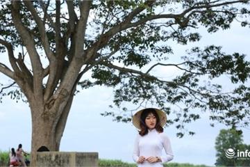 'Cây cô đơn' trong phim Mắt Biếc đang thu hút giới trẻ... tìm đến check-in