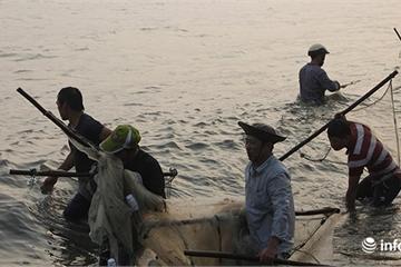 Huế: Ngư dân Thuận An trúng đậm vụ cá rò, vài ngày kéo lưới thu gần 2 tỷ