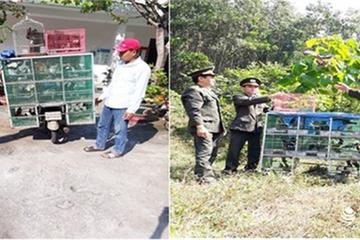 Xử phạt thêm một trường hợp từ Quảng Nam ra Đà Nẵng bán chim hoang dã
