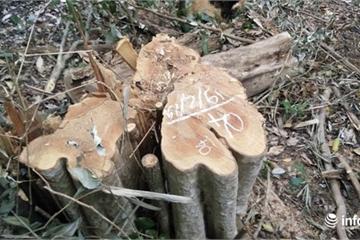 Ồ ạt phá rừng vùng giáp biên ở Đắk Nông những ngày đầu năm mới