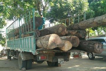 """Kon Tum: Xe chở gỗ lậu """"tung tăng"""" trên bến du lịch"""