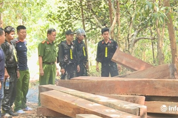 Công an mật phục bắt quả tang trưởng thôn cùng đồng phạm khai thác gỗ lậu