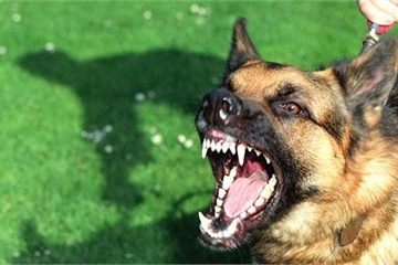 Đang chơi ở sân, 3 cháu nhỏ bị chó dại lao vào tấn công