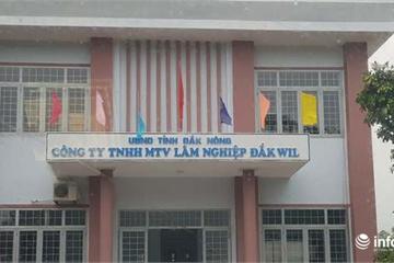 Đắk Nông: Phát hiện nhiều sai phạm tại Cty Đắk Wil, giám đốc nghỉ hưu theo chế độ