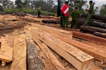Rừng giáp ranh giữa Đắk Lắk và Khánh Hòa bị tàn phá quy mô lớn
