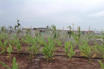 Phân bón nano cho cây trồng: Cho một nền nông nghiệp sạch