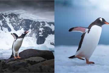 Chiêm ngưỡng vẻ đẹp băng giá và chim cánh cụt ở Nam Cực